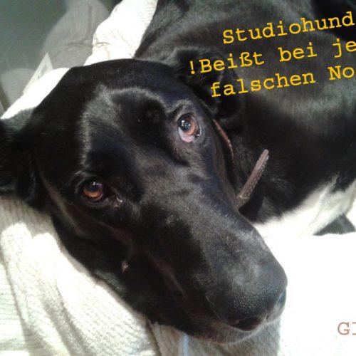 freunde_und_kuenstler_von_studio_m_20130718_2073945378